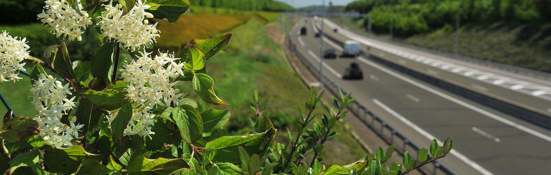 C'est le printemps sur les autoroutes Sanef et Sapn